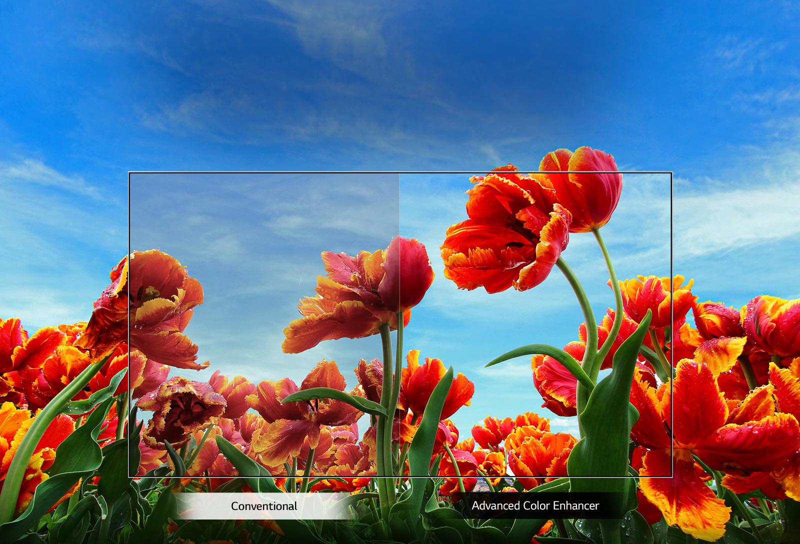 تلویزیون ال جی 43 اینچ مدل LM6300_ تلویزیون هوشمند 43 اینچ